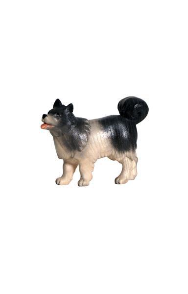 Hund Spitz.aspx