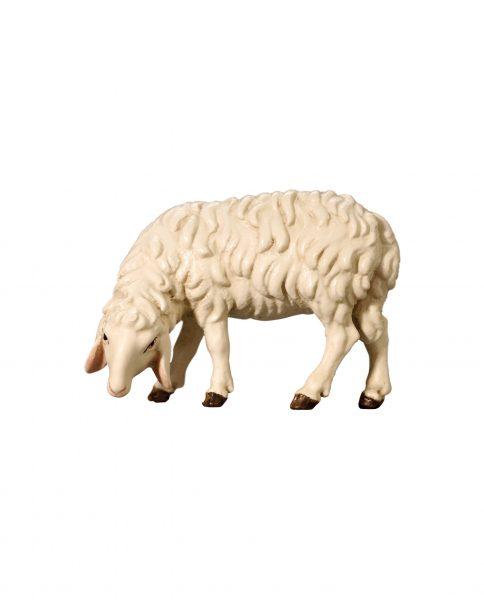 053052 Schaf grasend links