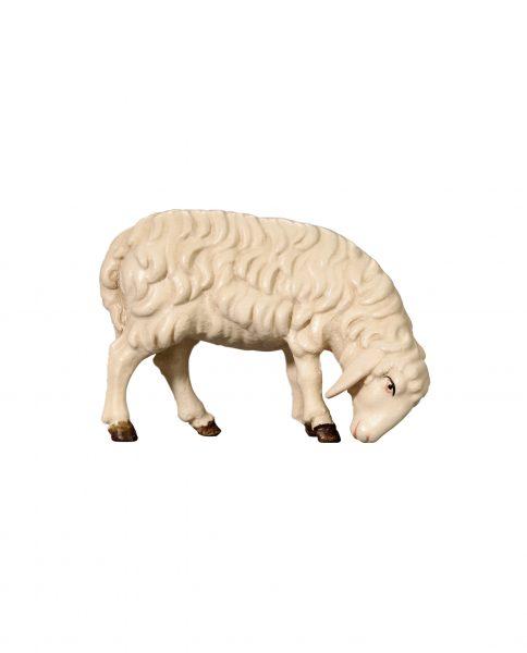 053053 Schaf grasend rechts