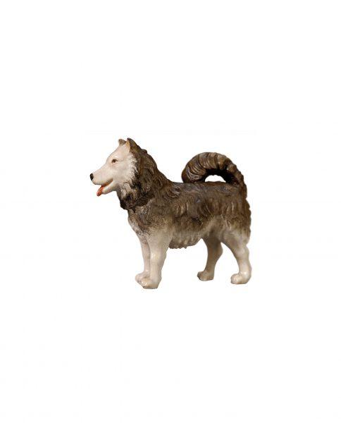 053076 Hund Spitz