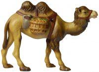 Kamel92_lasiert