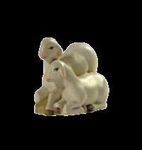 Schafe16