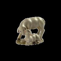 Schafe42